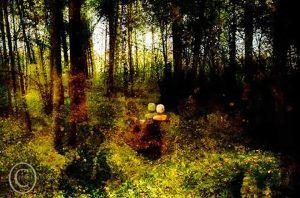 Sarjasta Naiseus - Metsänneito, 2010
