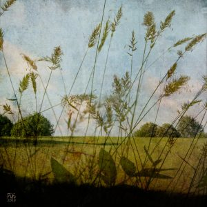 Heinäpelto, 30x30cm, mustesuihkuvedos + mehiläisvaha, 2015