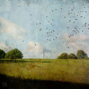 Kesäpelto - naakat, 30x30cm, mustesuihkuvedos + mehiläisvaha, 2015